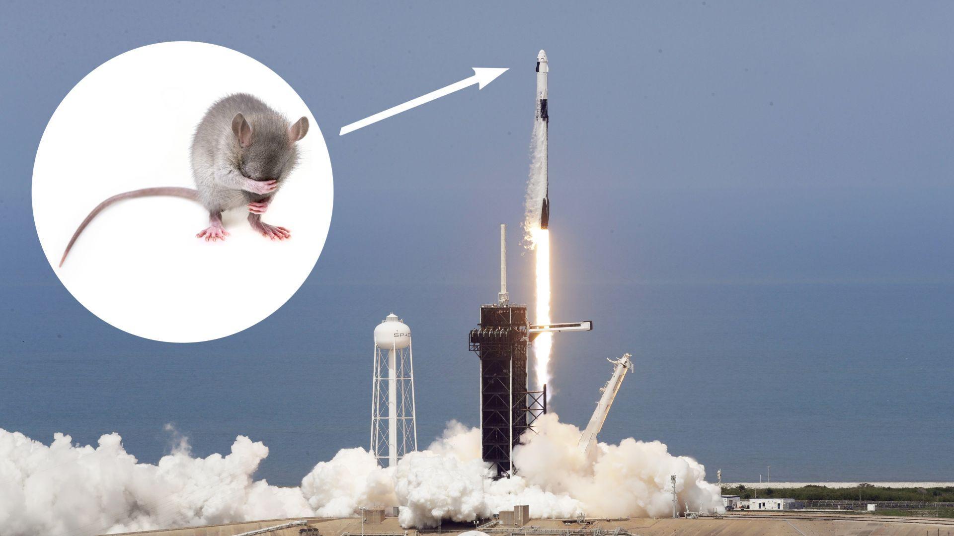 Има ли мишка на космическия кораб на Илон Мъск?