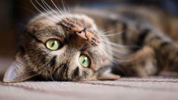 Котка измина 1200 км с камиона на съседите