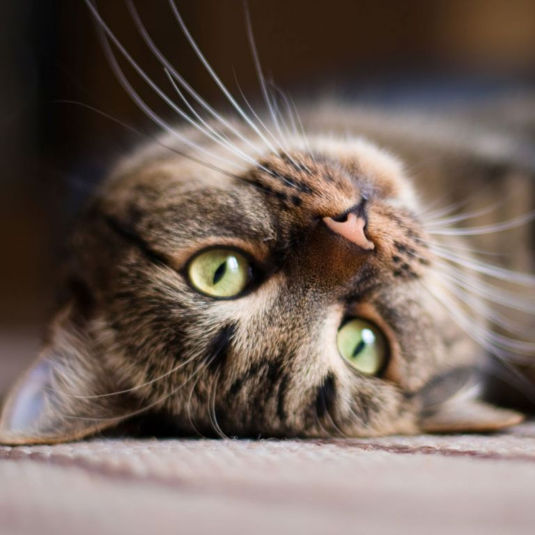Репортаж за Диди от Варна в световна фотографска агенция: Нарекоха я Спасителката на котките