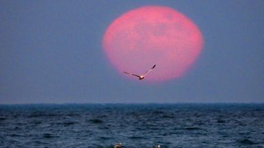 Вижте как Ягодовата Луна озари нощна Варна (снимки)