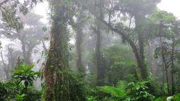 Спираща дъха разходка в призрачната облачна гора Монтеверде