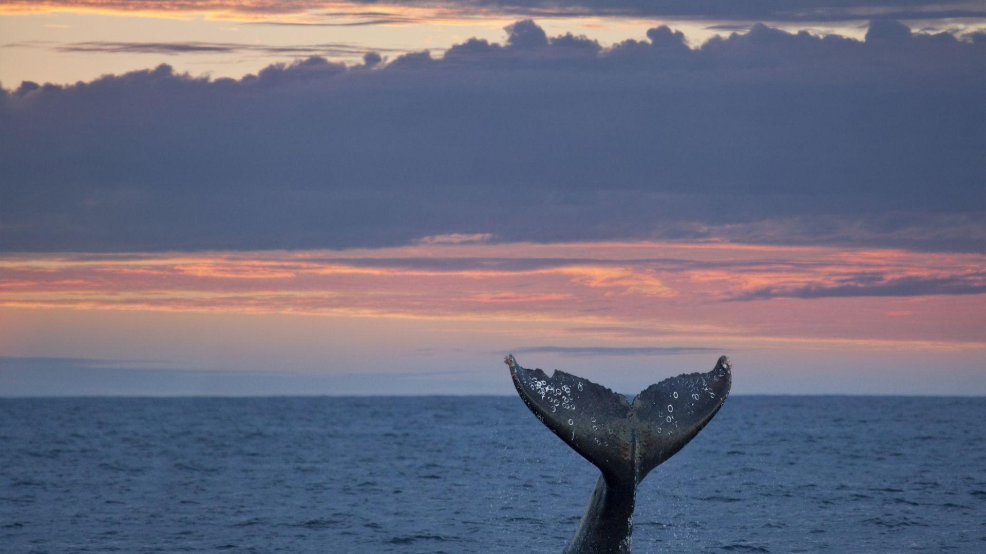 Климатичното затопляне опасно намалява смесването на океанските води
