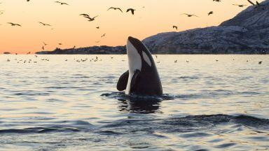"""Пандемията даде шанс на учените """"да чуят"""" океаните"""
