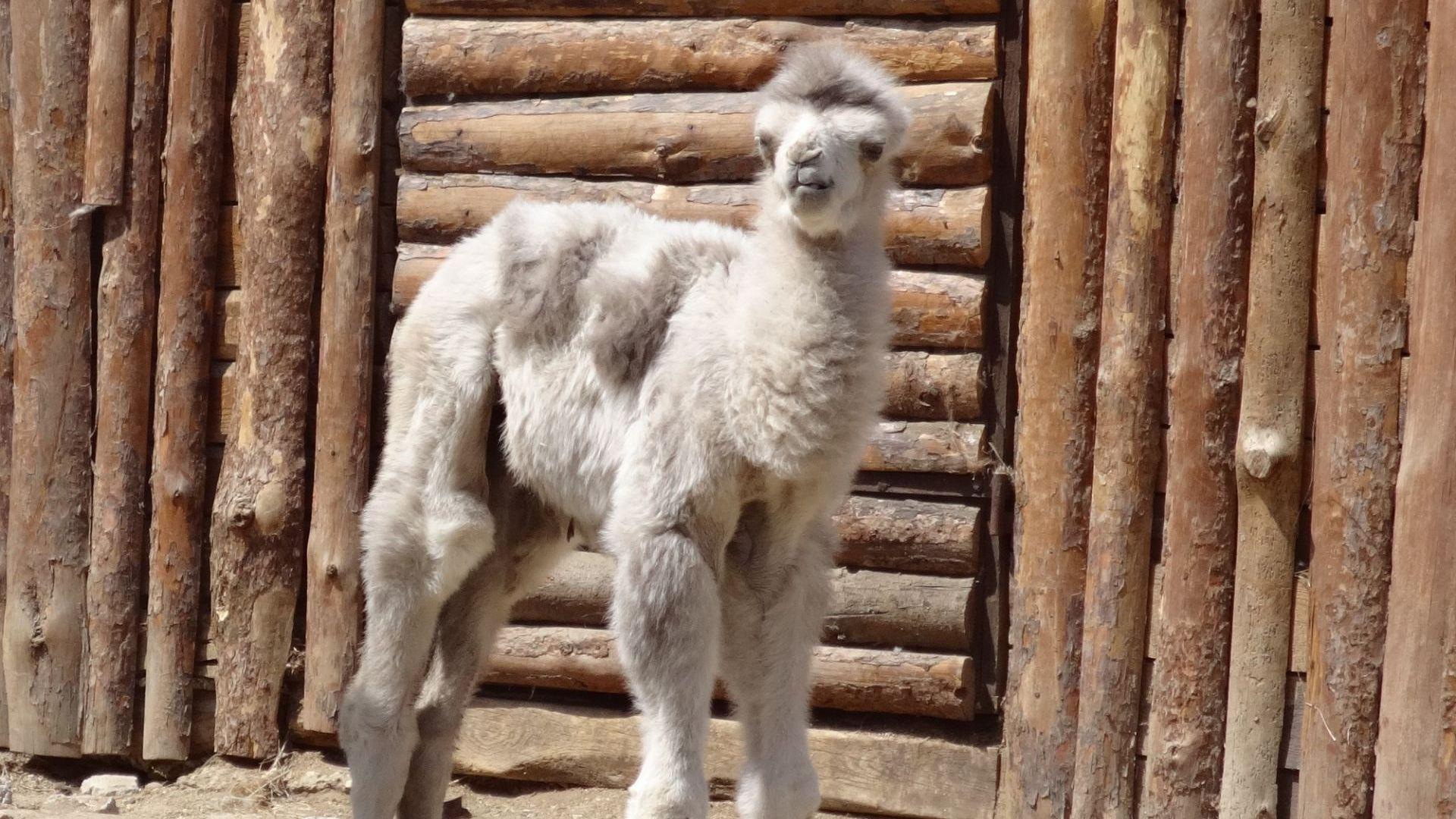Зоопаркът във Варна отчита бум на бели бебета (видео)