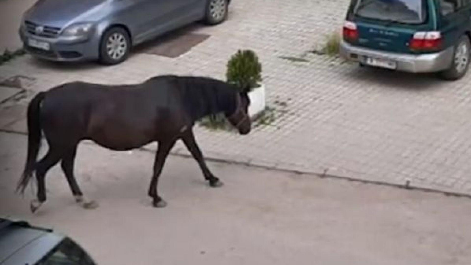 """Стадо безстопанствени коне тормози жителите на кв. """"Дървеница"""""""