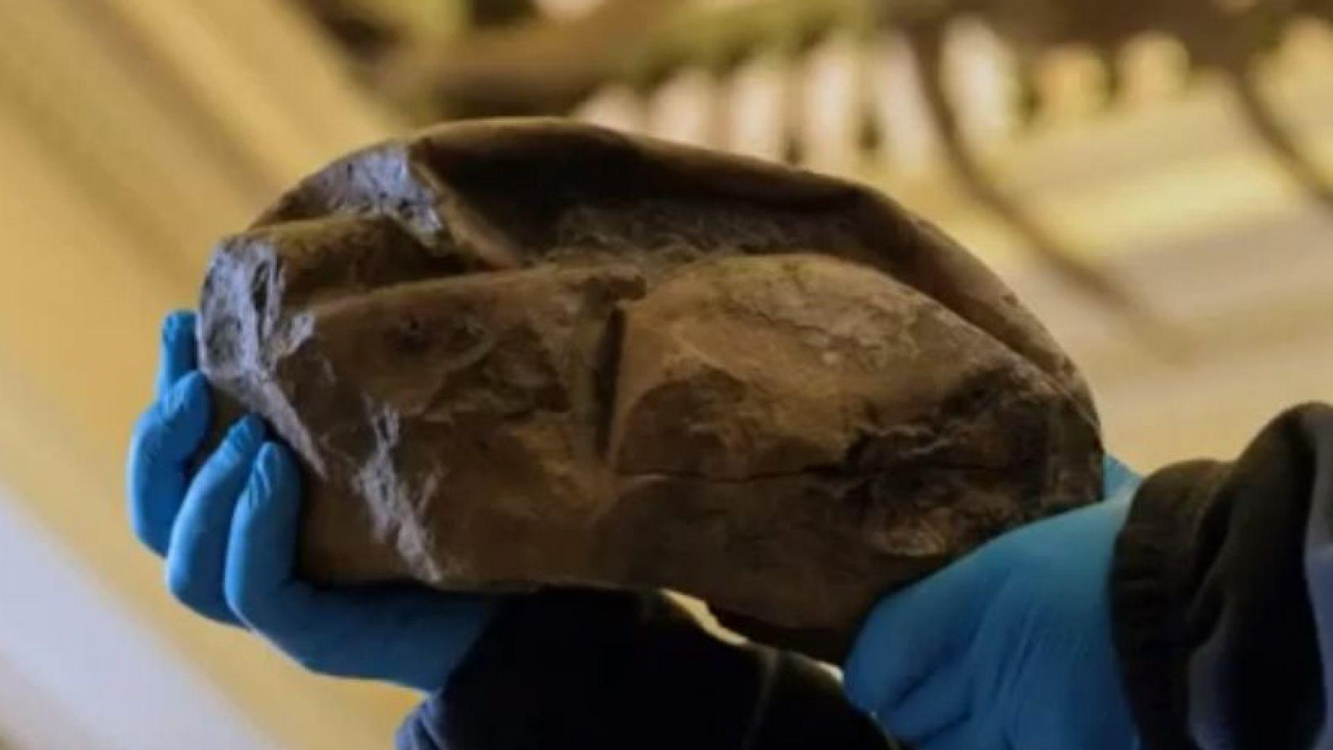 Откриха мистериозно яйце на 68 млн. години на остров до Антарктида (видео)