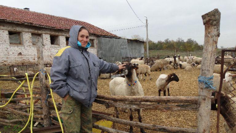 Върховният административен съд (ВАС) призна окончателно, че чума в овцефермата