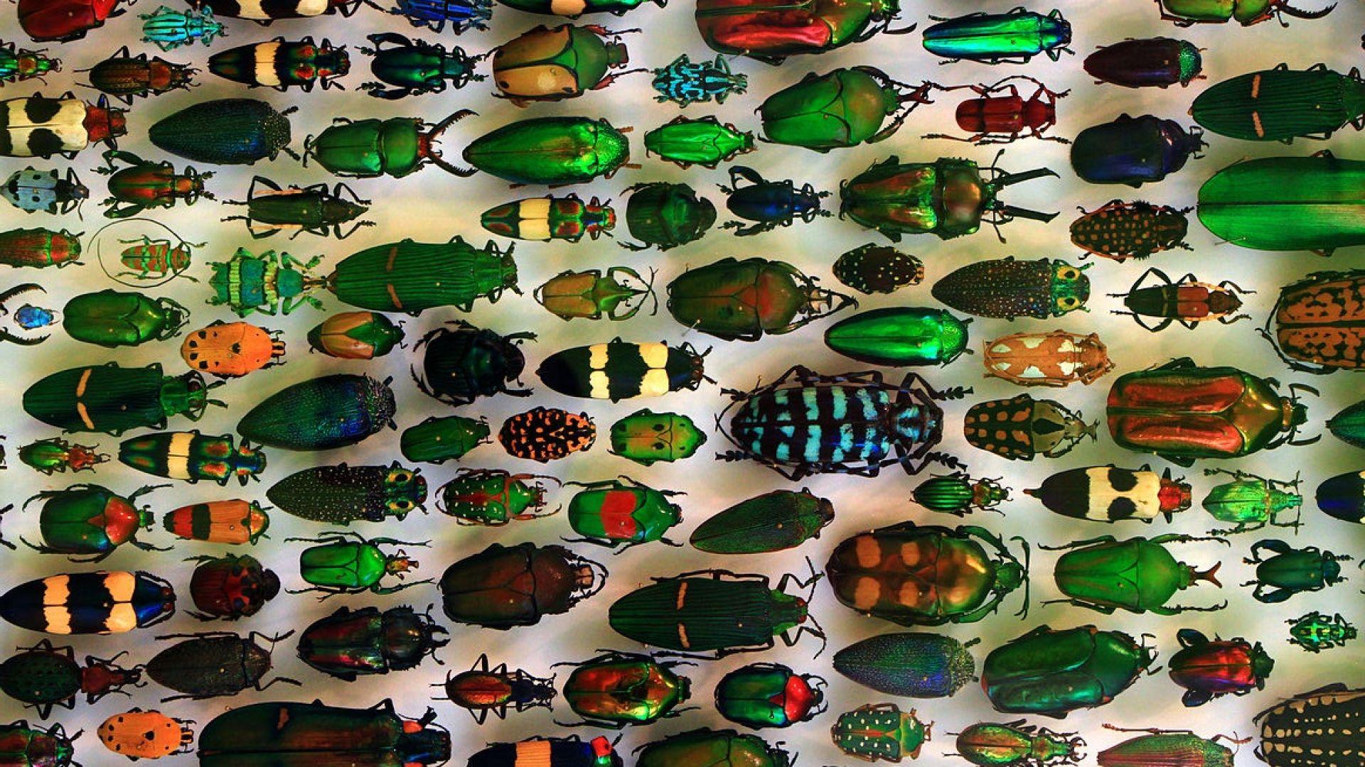 Учени създадоха охлаждащо покритие, вдъхновени от обитаващи вулкани бръмбари