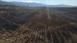 Пожар изпепели 500 декара пшеница и комбайн край Септември (снимки)