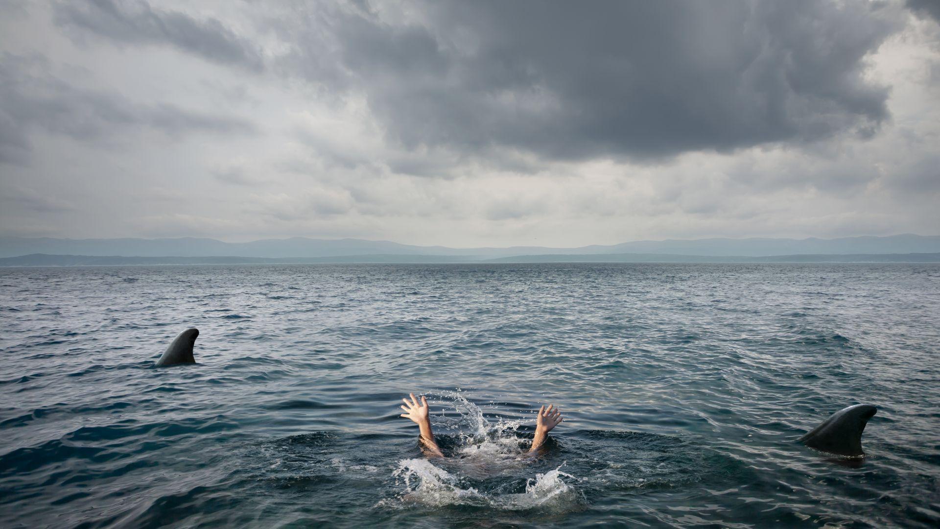 Акула уби човек в плитки води