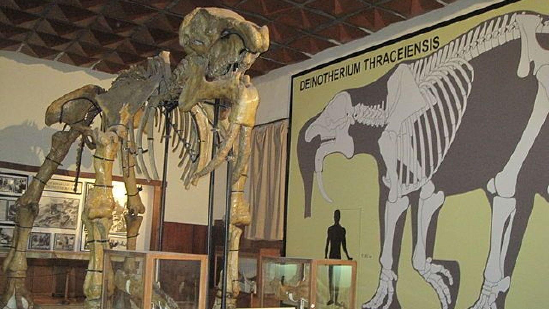 Палеонтологичен музей Асеновград