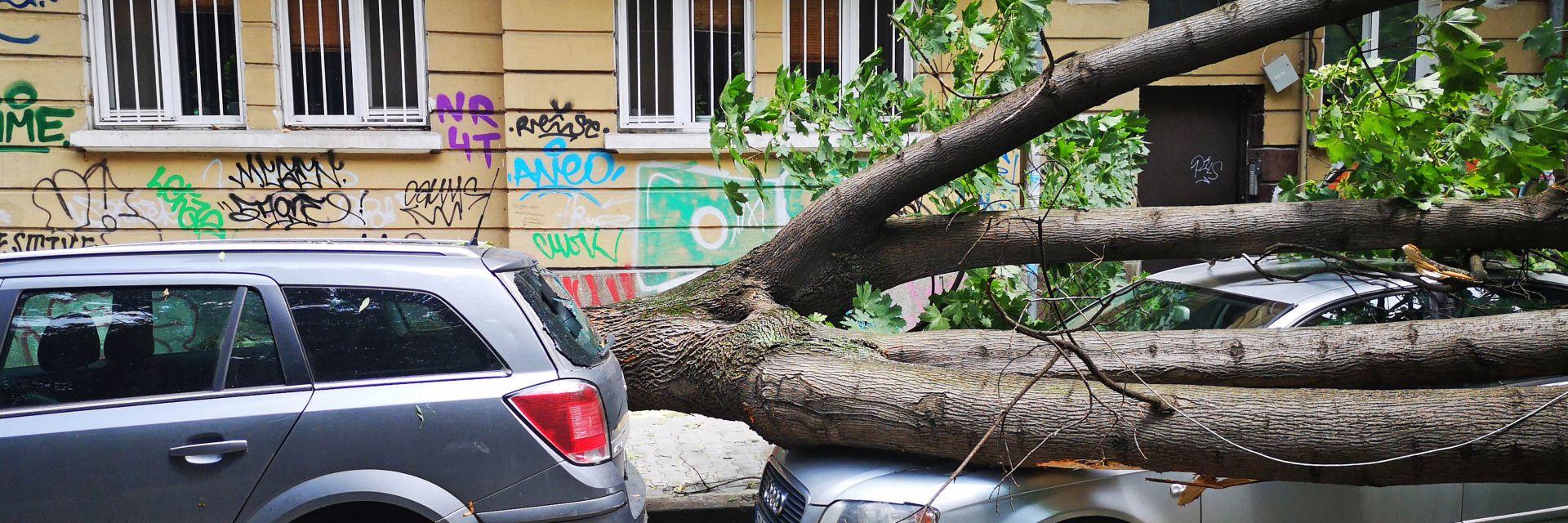 След бурята в София - клон падна и удари човек, дърво затисна коли (снимки)