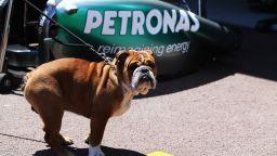 Ботас се оплака: Кучето на Хамилтън се изходи пред кемпера ми
