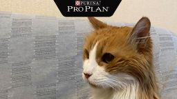 Котето Мишо е победител в конкурса за най-дълголетна котка в България