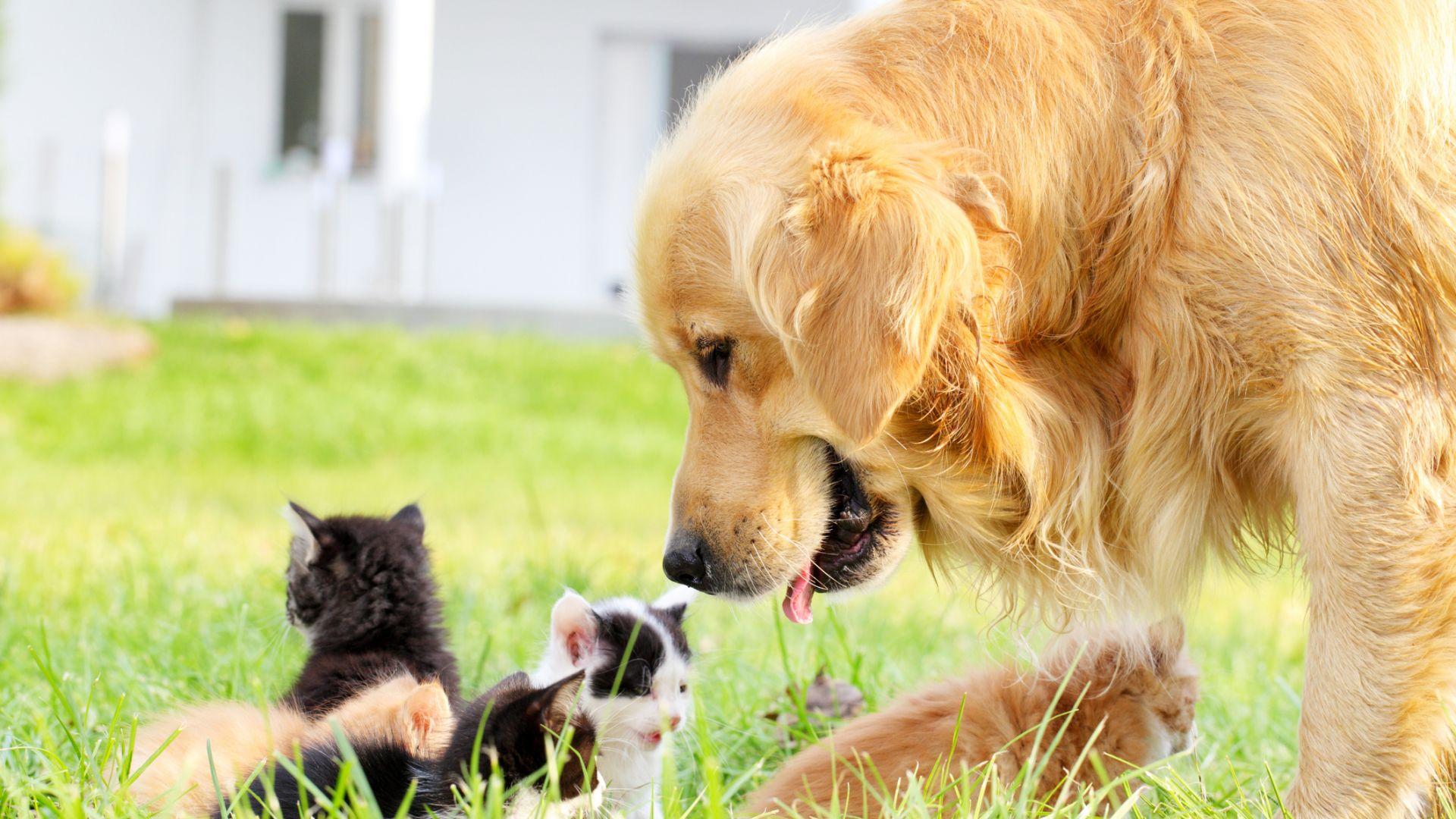 Бум на кърлежи - пазете кучето и котката през цялото лято!