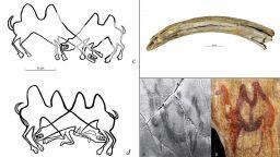 В Сибир откриха най-старите гравюри на животни в Азия - биещи се камили