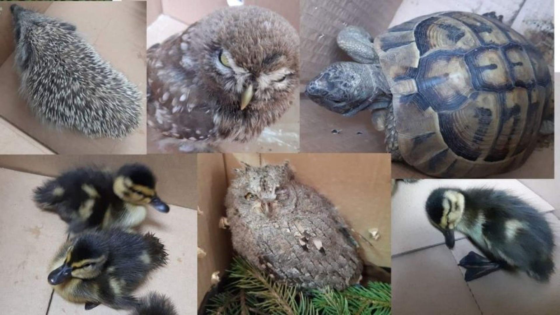 Пет животни от защитени видове бяха спасени от еколози