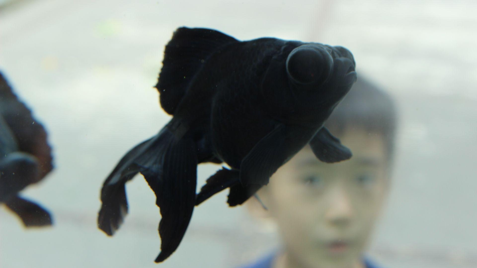 Разкриха тайните на черните риби в океанските дълбини