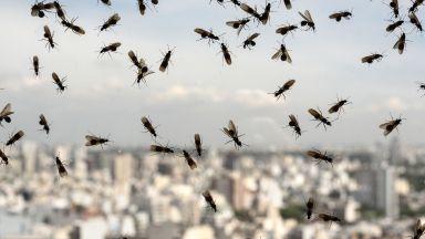 Летящи мравки объркаха  радар на метеорологичната  служба в Англия