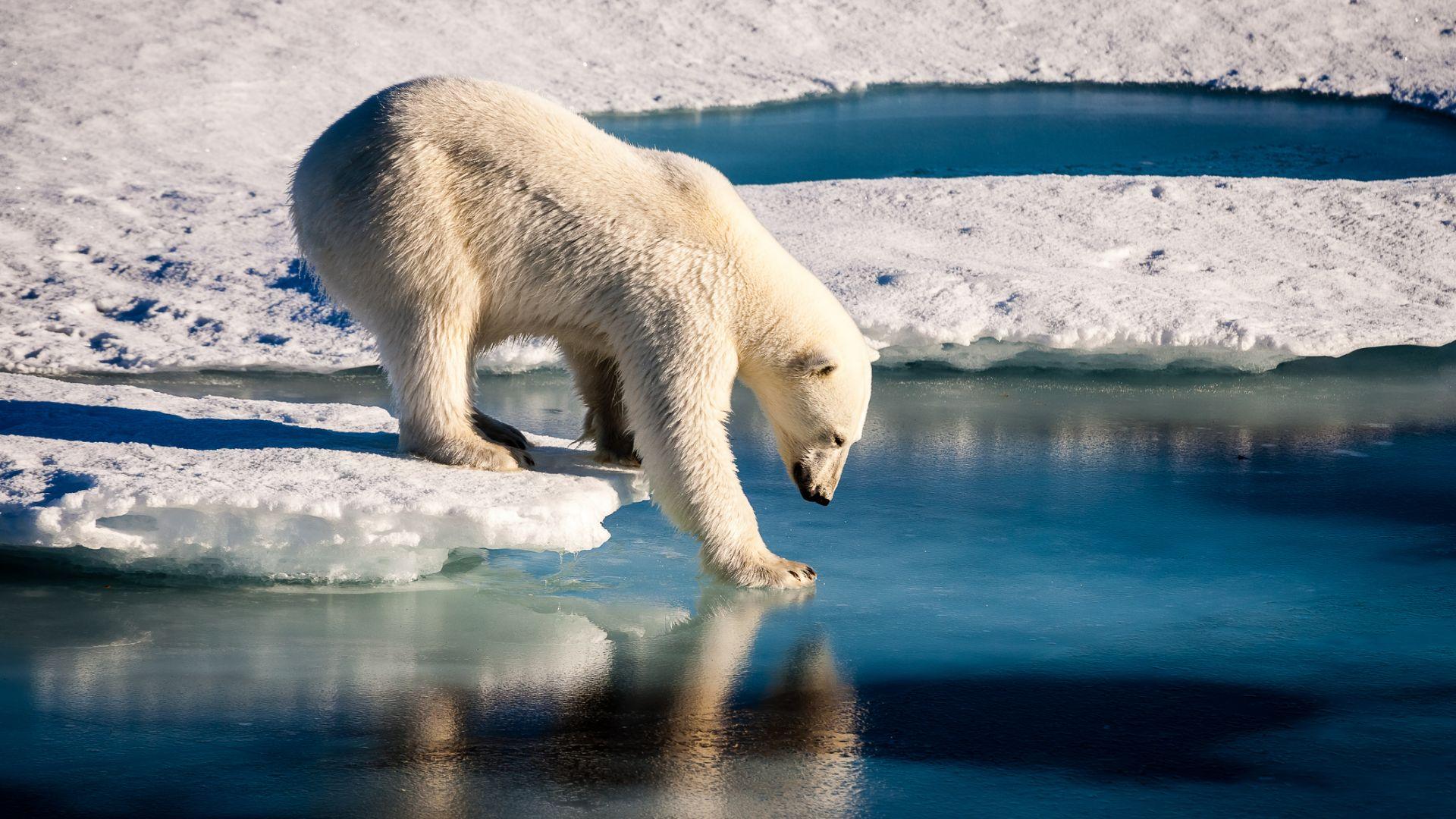 """Десетки """"горещи"""" рекорди на арктическите острови"""