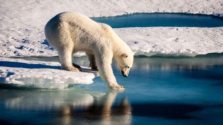 Сибирската част на Арктика губи по над 11 милиарда тона лед годишно