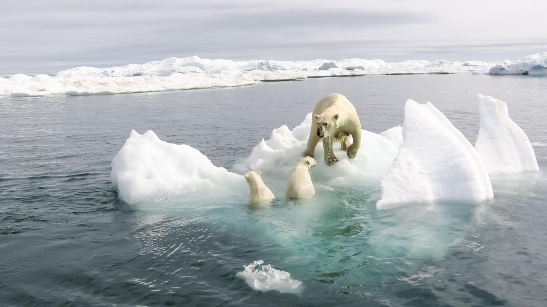 Арктика без лед: рекордно ниски нива в момента