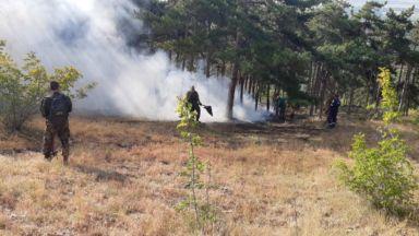 Пожар обхвана стотици декари гора в Хасковско