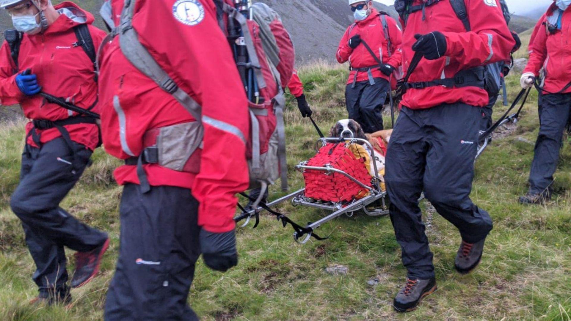 Спасители свалиха ранен Санбернар от най-високия връх в Северозападна Англия (видео)
