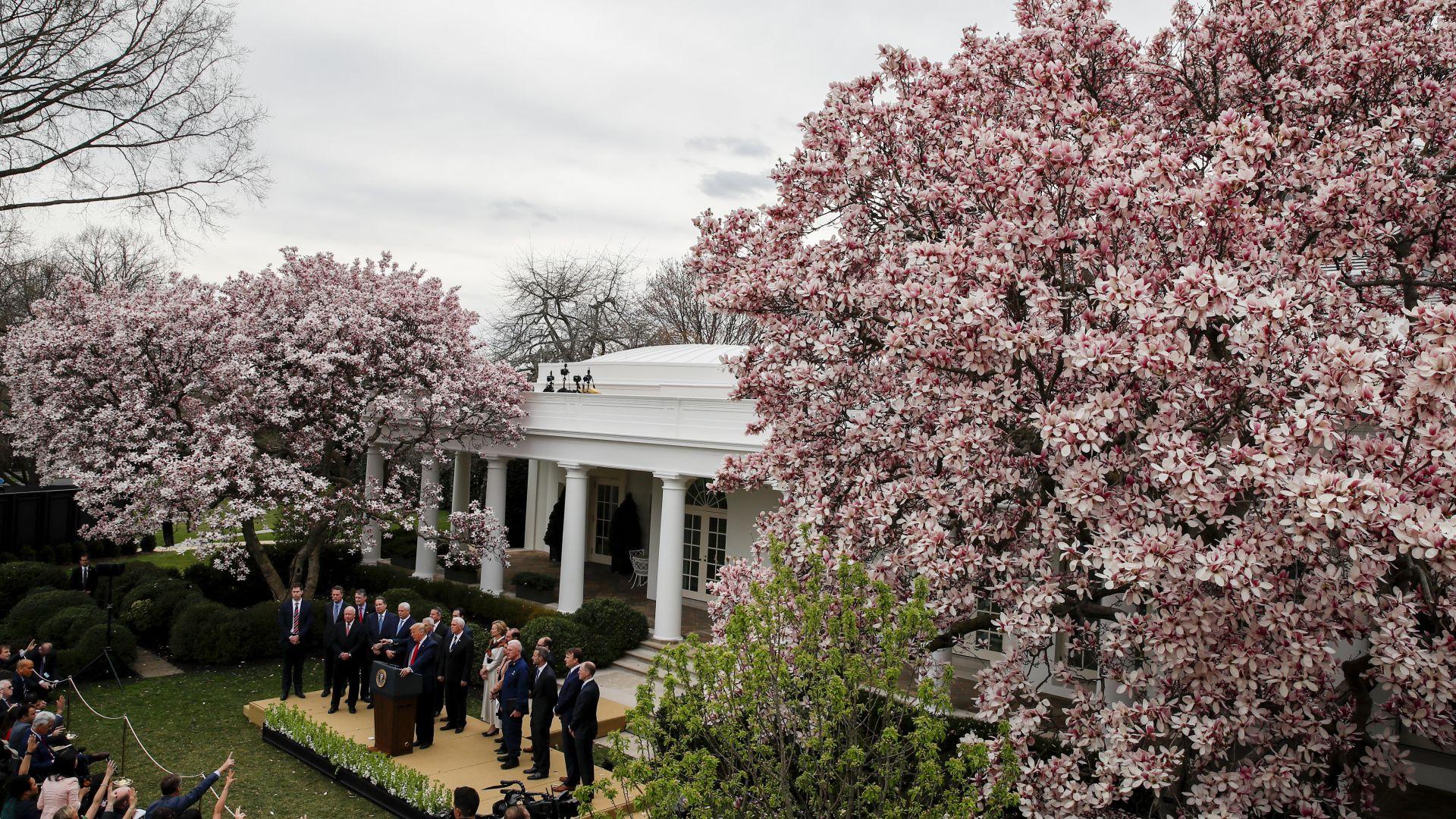 Мелания Тръмп ще обнови Розовата градина на Белия дом в стил 60-те (снимки)
