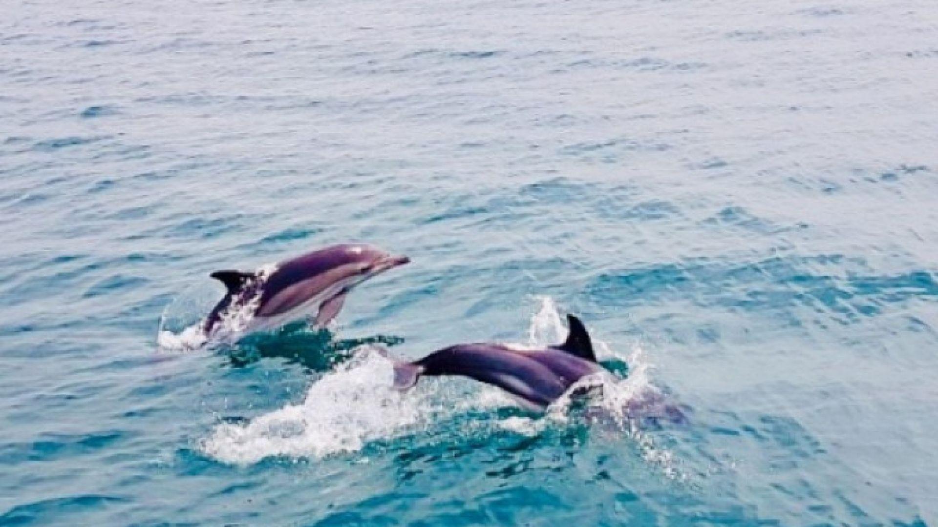 Делфини зарадваха плажуващи в Бяла