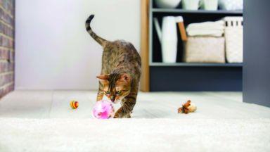 5 мита за кастрацията при котките