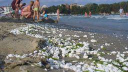 Мазните топчета се появиха и на Бургаския плаж, събират ги на ръка