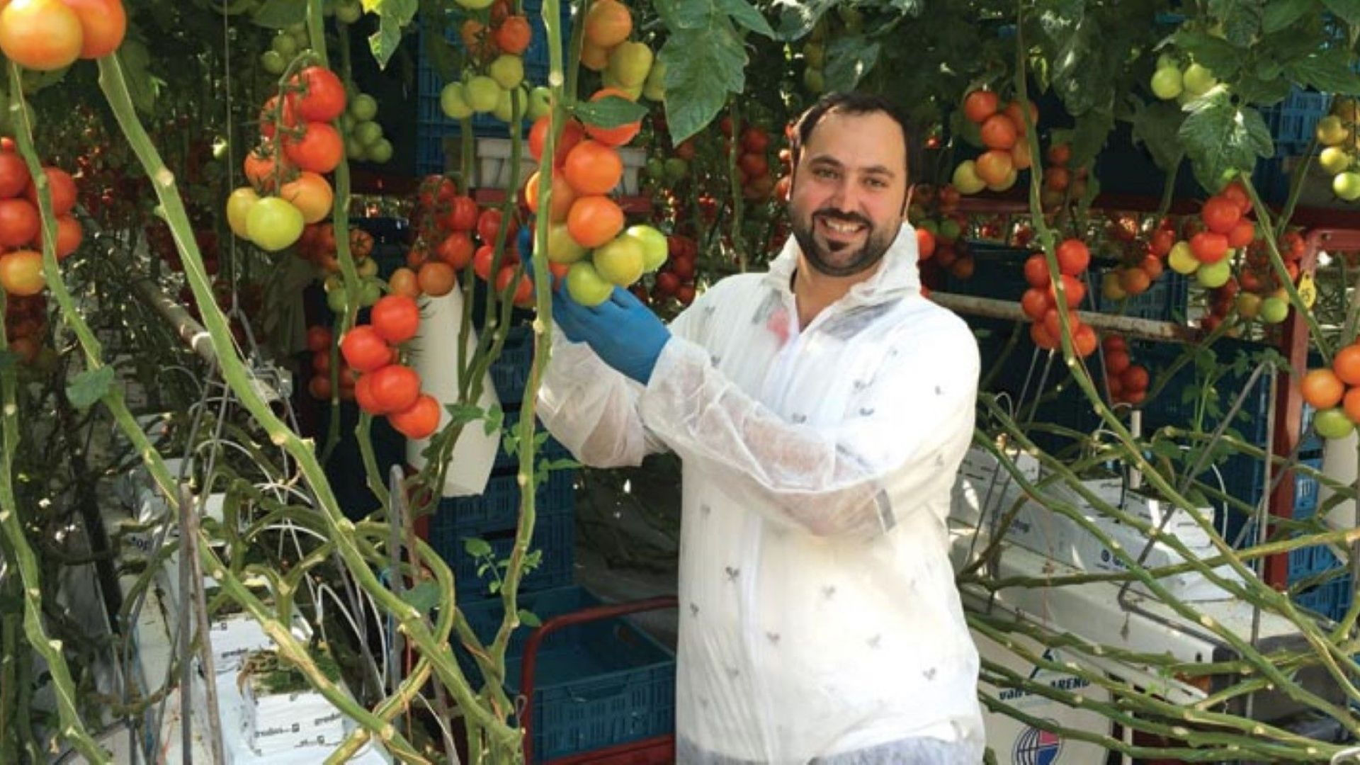 В ОАЕ отглеждат зеленчуци без вода и почва. Как така?