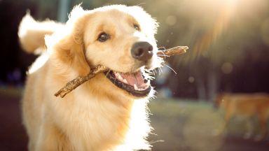 Кучетата обработват речта по същия начин като хората