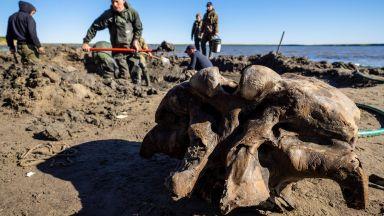 Откриха запазен мамут в руско езеро