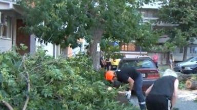 Шест коли пострадаха от паднало дърво в Бургас