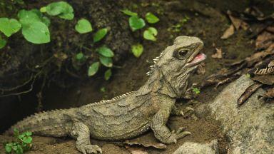 Откриха вид, имащ общи гени и с влечугите, и с бозайниците