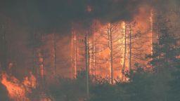 Пожарът край Лесово премина Тунджа, евакуираха цяло село
