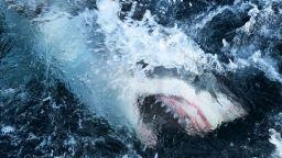 Уникално видео: Акула-човекоядец направи 4,5-метров скок над водата