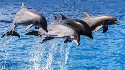Стотици делфини преминаха зрелищно край калифорнийско градче (видео)