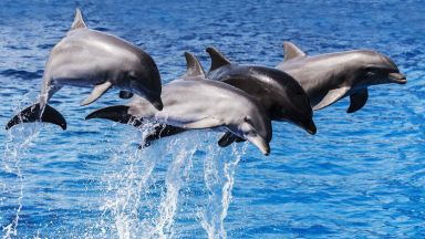 Делфините и хората доста си приличат