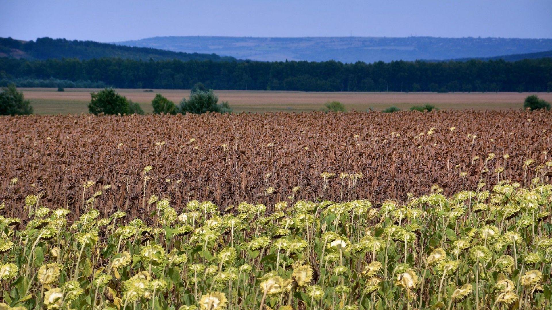 Близо 120 млн. лева по мерки COVID 1 и COVID 2 за земеделци и животновъди