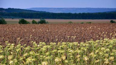 Българските земеделци се завръщат към българската селекция