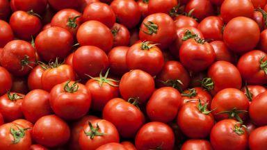 Сериозен скок на цената на доматите, отглеждани на открито