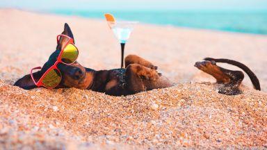 Интересни факти за кучетата по случай техния световен празник