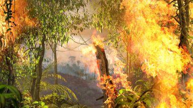 Емисиите на СО2 от горски пожари са достигнали рекордни нива това лято