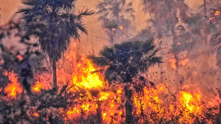 Горските пожари в Амазония вредят сериозно на здравето