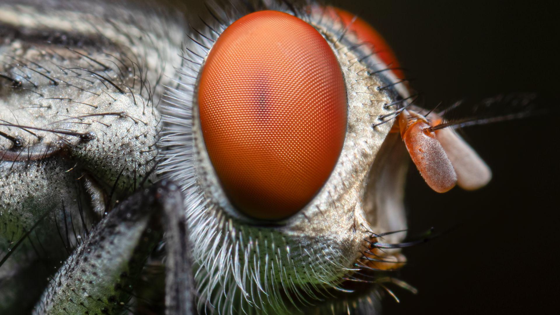 Какво знаем за сложните очи на насекомите (снимки)