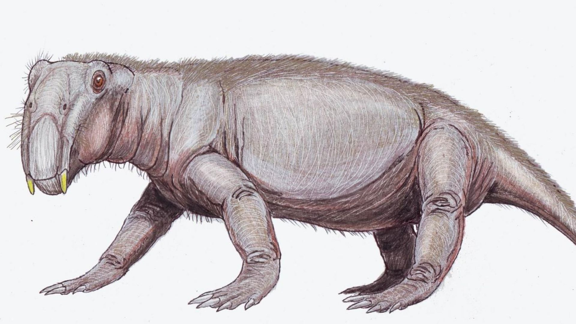 Животните хибернират от 250 милиона години