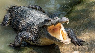Невероятно: Крокодил се появи в река в Германия